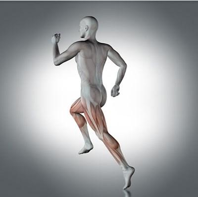 מתיחה בשריר הירך - פציעות ספורט