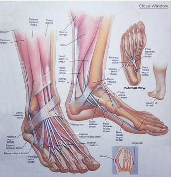 מבנה כפות הרגליים - טיפול בכאבים
