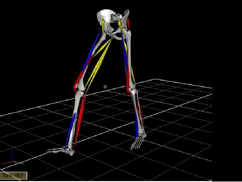 הנתונים של ניתוח התנועה באיימקס