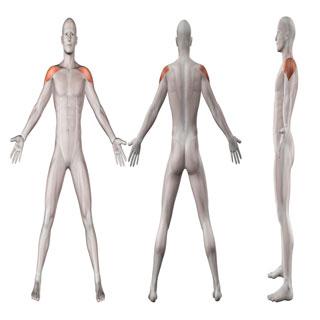 טיפול בדלקת בכתף